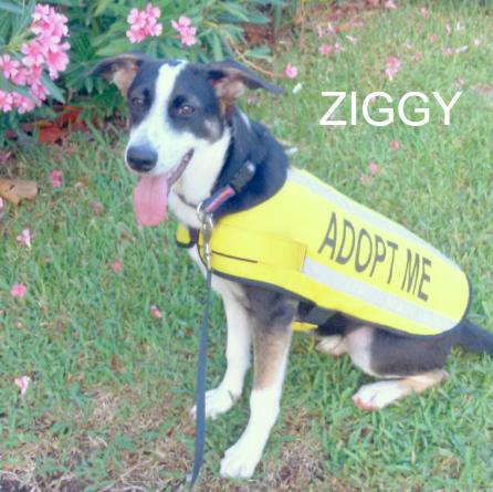 ziggy-square